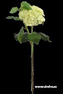 HORTENZIA ateliérový kvet