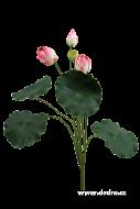 LOTOS ateliérový kvet