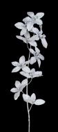 ORCHIDEA kvety strieborné