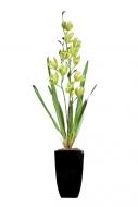 ORCHIDEA v kvetináči zelená